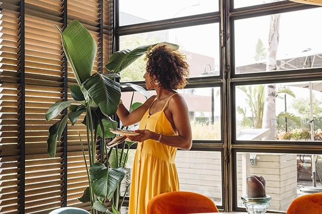 Buy online Window sun shades